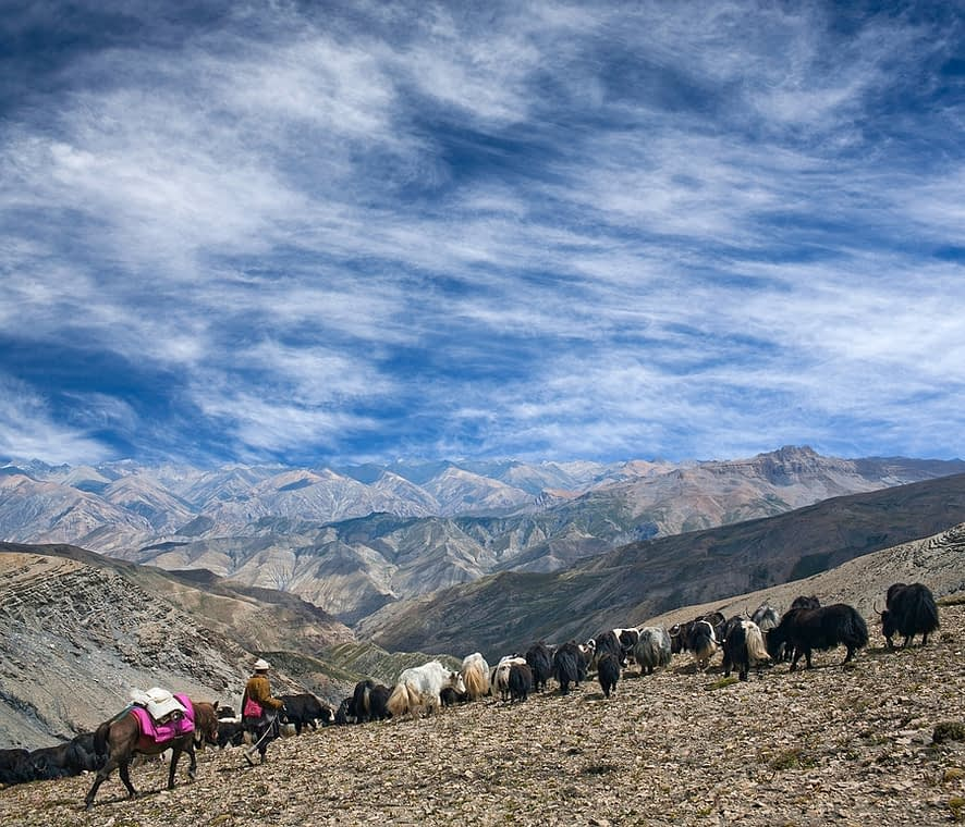 An unidentified Tibetan nomad with horse and caravan of yaks crossing on Shey La pass in Upper Dolpo, Shey Phoksundo National Park, Nepal, Himalayas